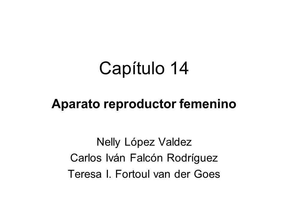Capítulo 14 Aparato reproductor femenino Nelly López Valdez Carlos Iván Falcón Rodríguez Teresa I. Fortoul van der Goes