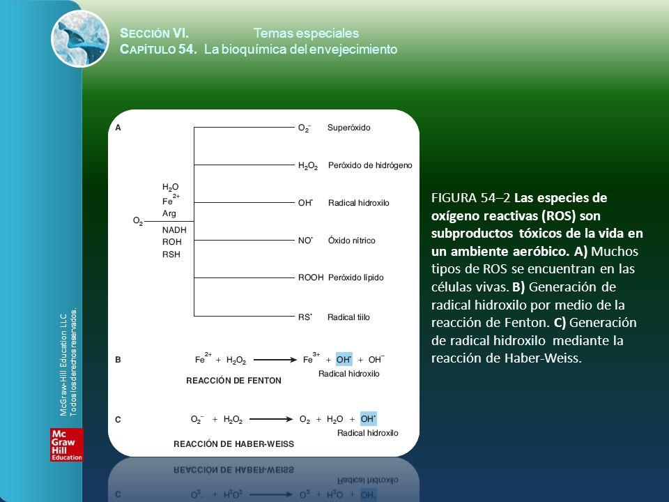 S ECCIÓN VI.Temas especiales C APÍTULO 54. La bioquímica del envejecimiento FIGURA 54–2 Las especies de oxígeno reactivas (ROS) son subproductos tóxic