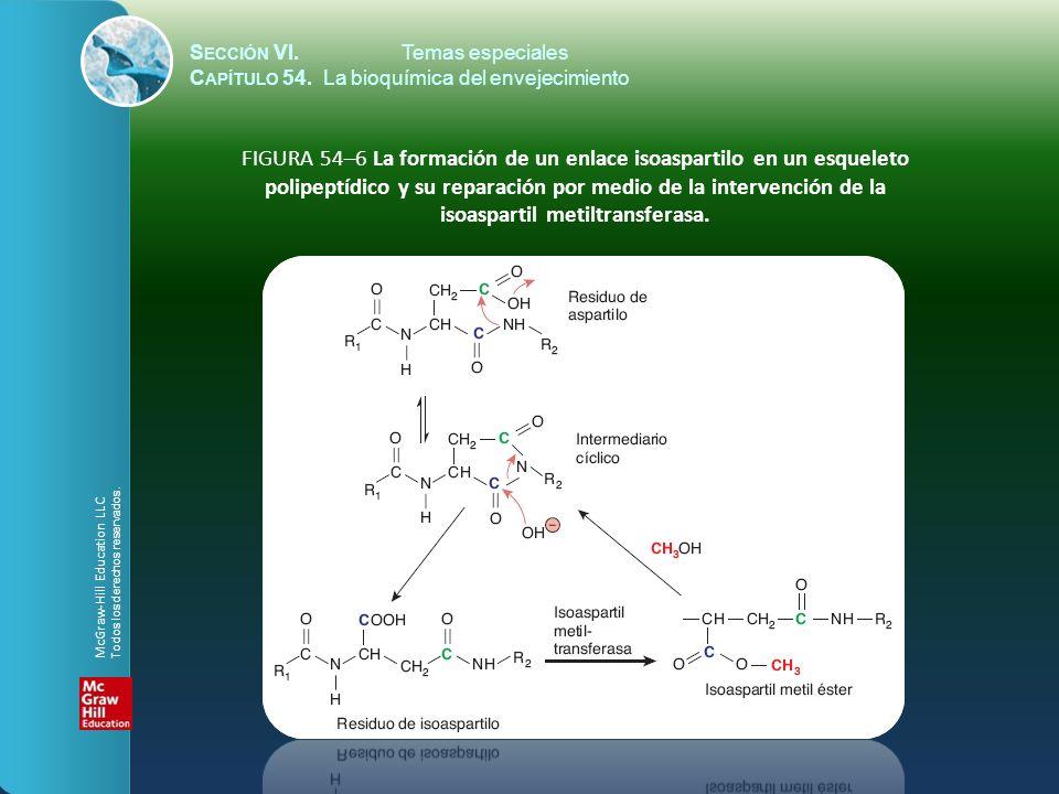 S ECCIÓN VI.Temas especiales C APÍTULO 54. La bioquímica del envejecimiento FIGURA 54–6 La formación de un enlace isoaspartilo en un esqueleto polipep