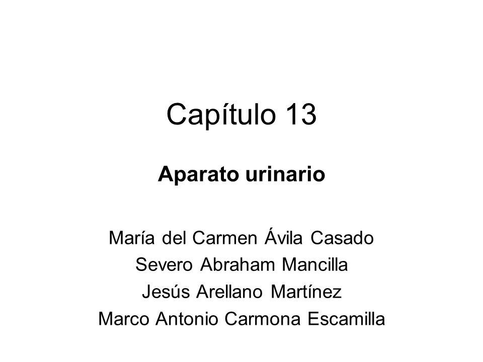 Capítulo 13 Aparato urinario María del Carmen Ávila Casado Severo Abraham Mancilla Jesús Arellano Martínez Marco Antonio Carmona Escamilla