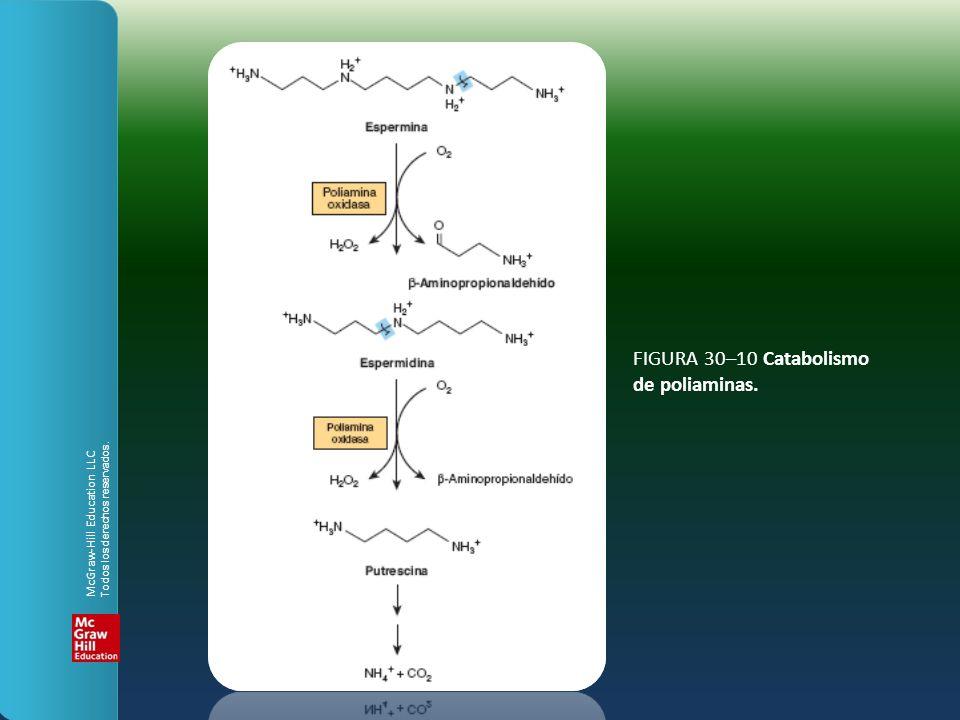 FIGURA 30–10 Catabolismo de poliaminas. McGraw-Hill Education LLC Todos los derechos reservados.