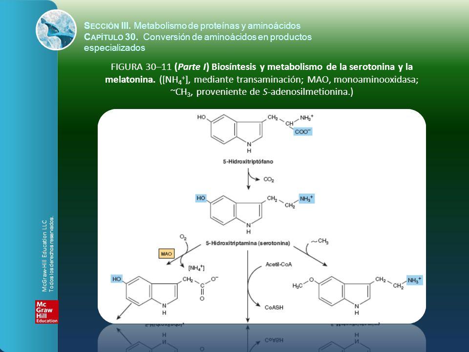 FIGURA 30–11 (Parte I) Biosíntesis y metabolismo de la serotonina y la melatonina. ([NH 4 + ], mediante transaminación; MAO, monoaminooxidasa; ~CH 3,