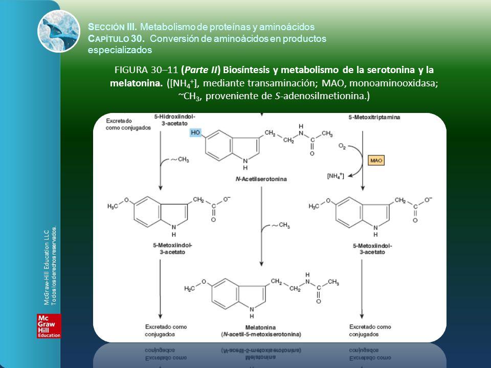 FIGURA 30–11 (Parte II) Biosíntesis y metabolismo de la serotonina y la melatonina. ([NH 4 + ], mediante transaminación; MAO, monoaminooxidasa; ~CH 3,