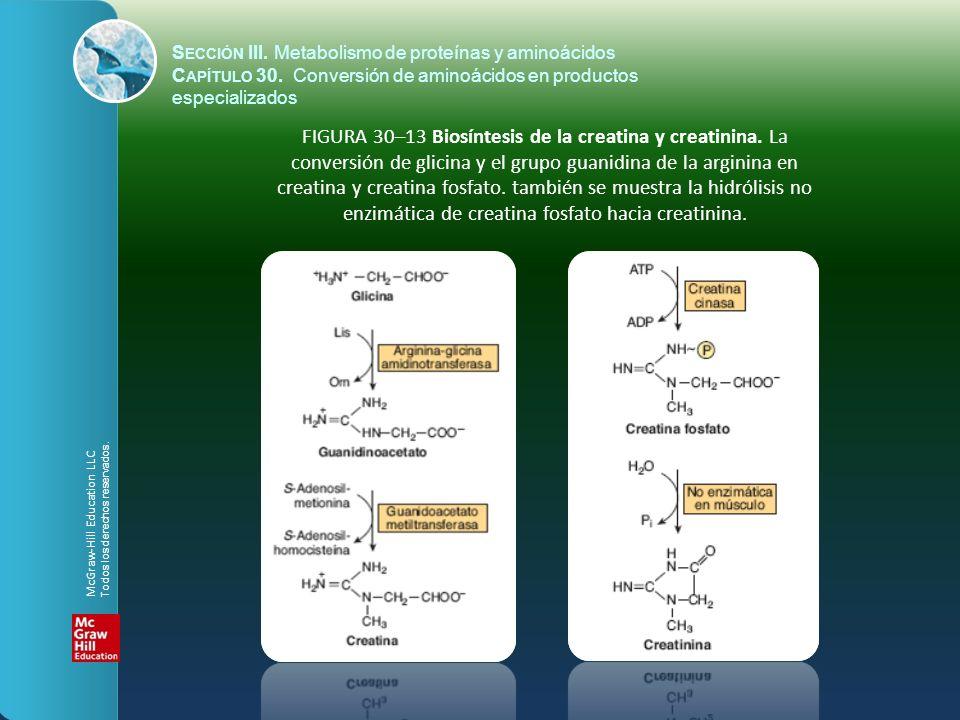 FIGURA 30–13 Biosíntesis de la creatina y creatinina. La conversión de glicina y el grupo guanidina de la arginina en creatina y creatina fosfato. tam