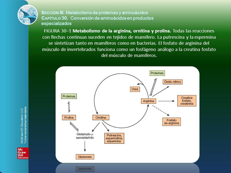 S ECCIÓN III. Metabolismo de proteínas y aminoácidos C APÍTULO 30. Conversión de aminoácidos en productos especializados FIGURA 30–1 Metabolismo de la