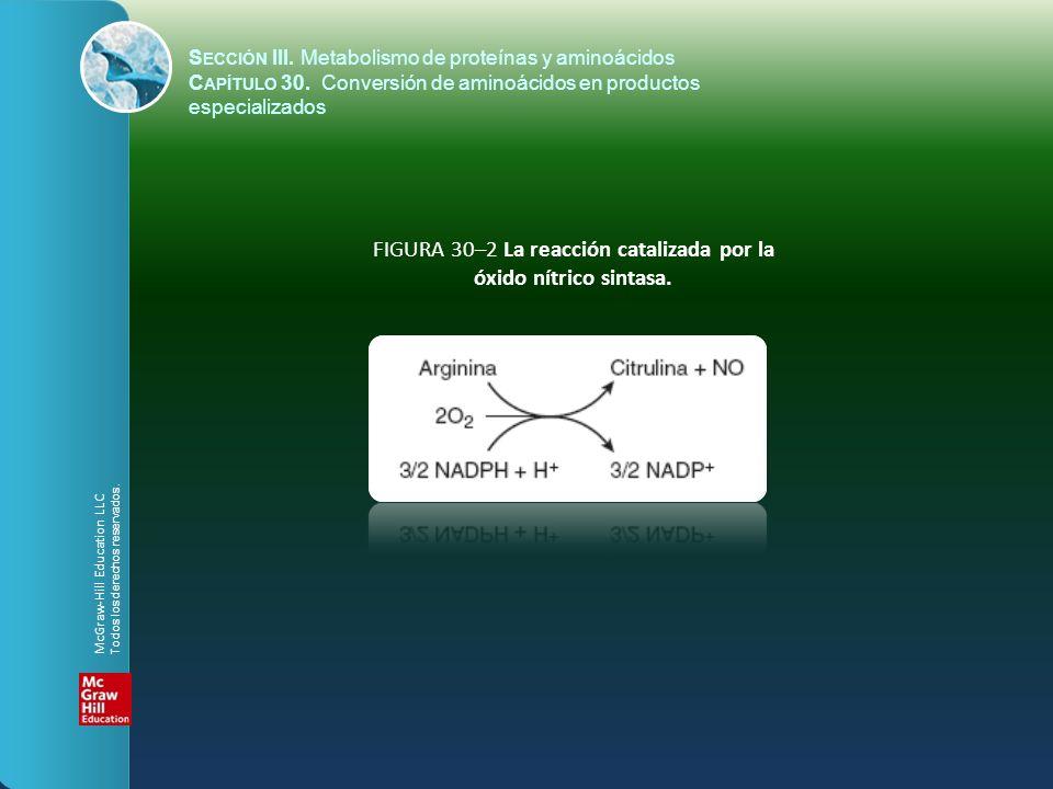 FIGURA 30–2 La reacción catalizada por la óxido nítrico sintasa. S ECCIÓN III. Metabolismo de proteínas y aminoácidos C APÍTULO 30. Conversión de amin