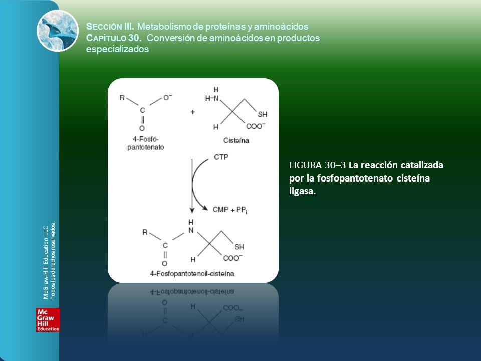 FIGURA 30–4 Conversión de cisteína en taurina.