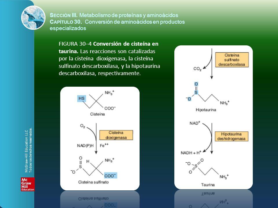 FIGURA 30–4 Conversión de cisteína en taurina. Las reacciones son catalizadas por la cisteína dioxigenasa, la cisteína sulfinato descarboxilasa, y la