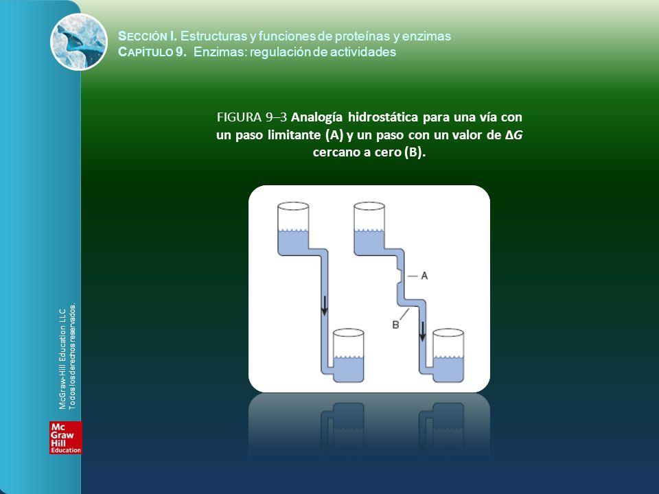 FIGURA 9–3 Analogía hidrostática para una vía con un paso limitante (A) y un paso con un valor de ΔG cercano a cero (B). S ECCIÓN I. Estructuras y fun