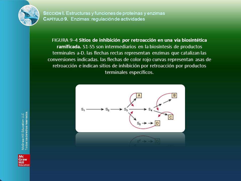FIGURA 9–4 Sitios de inhibición por retroacción en una vía biosintética ramificada. S1-S5 son intermediarios en la biosíntesis de productos terminales