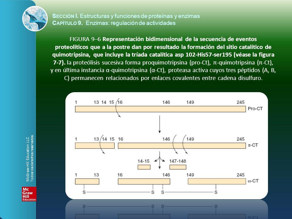 FIGURA 9–6 Representación bidimensional de la secuencia de eventos proteolíticos que a la postre dan por resultado la formación del sitio catalítico d