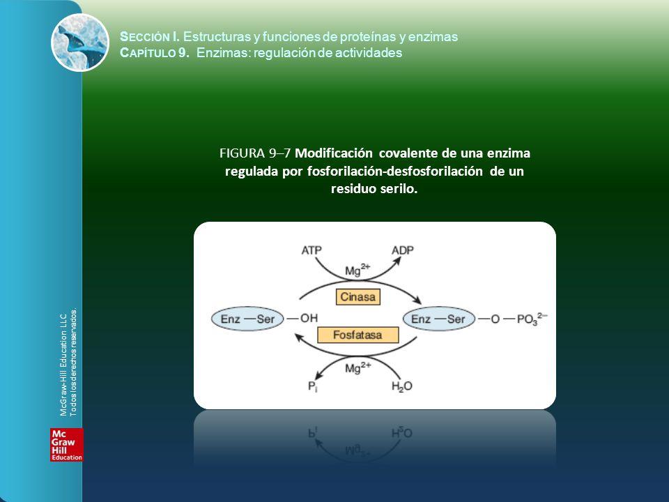 FIGURA 9–7 Modificación covalente de una enzima regulada por fosforilación-desfosforilación de un residuo serilo. S ECCIÓN I. Estructuras y funciones
