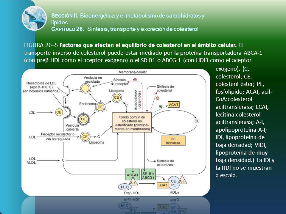 FIGURA 26–5 Factores que afectan el equilibrio de colesterol en el ámbito celular. El transporte inverso de colesterol puede estar mediado por la prot