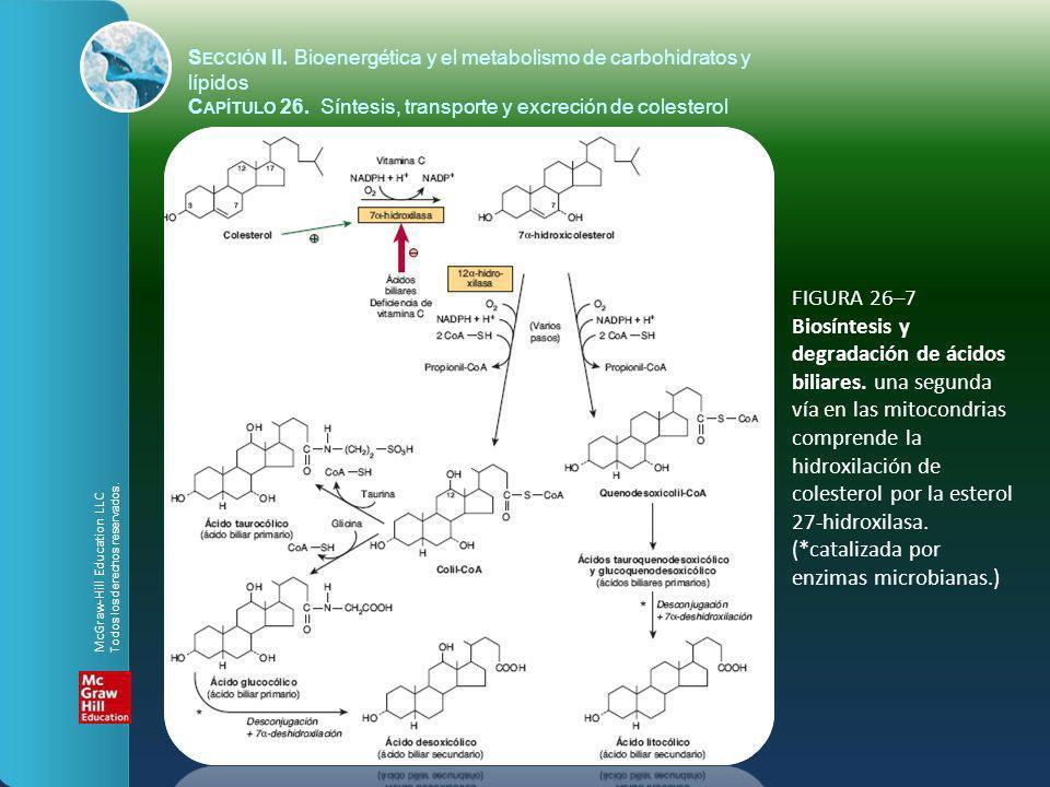 FIGURA 26–7 Biosíntesis y degradación de ácidos biliares. una segunda vía en las mitocondrias comprende la hidroxilación de colesterol por la esterol