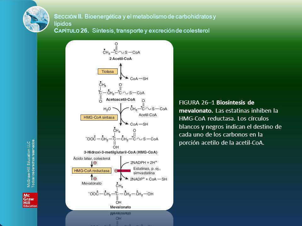 S ECCIÓN II. Bioenergética y el metabolismo de carbohidratos y lípidos C APÍTULO 26. Síntesis, transporte y excreción de colesterol FIGURA 26–1 Biosín