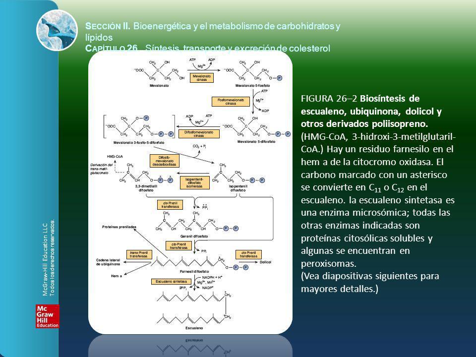 FIGURA 26–2 Biosíntesis de escualeno, ubiquinona, dolicol y otros derivados poliisopreno. (HMG-CoA, 3-hidroxi-3-metilglutaril- CoA.) Hay un residuo fa
