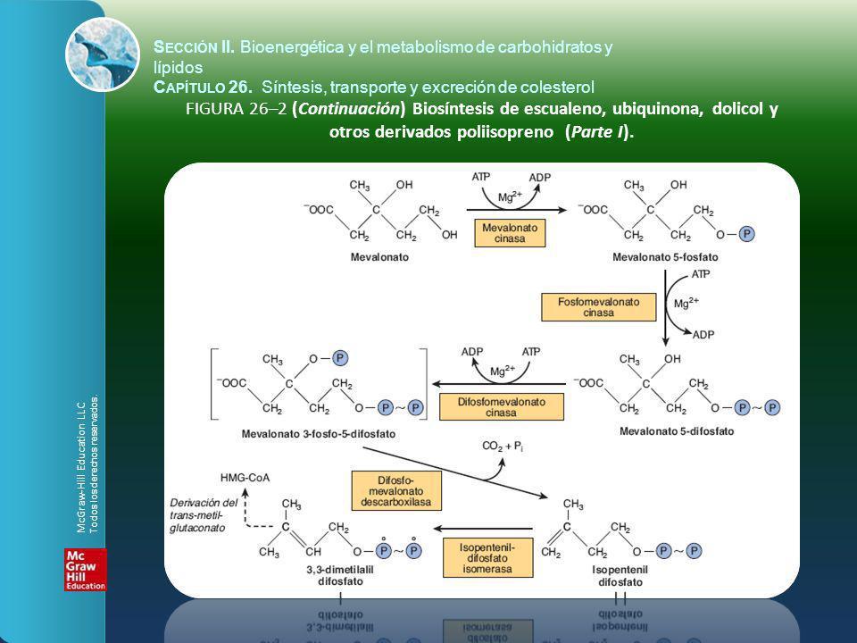 FIGURA 26–2 (Continuación) Biosíntesis de escualeno, ubiquinona, dolicol y otros derivados poliisopreno (Parte I). S ECCIÓN II. Bioenergética y el met