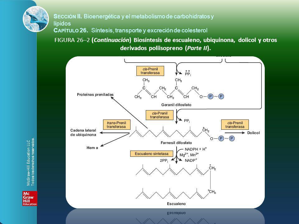 FIGURA 26–2 (Continuación) Biosíntesis de escualeno, ubiquinona, dolicol y otros derivados poliisopreno (Parte II). S ECCIÓN II. Bioenergética y el me