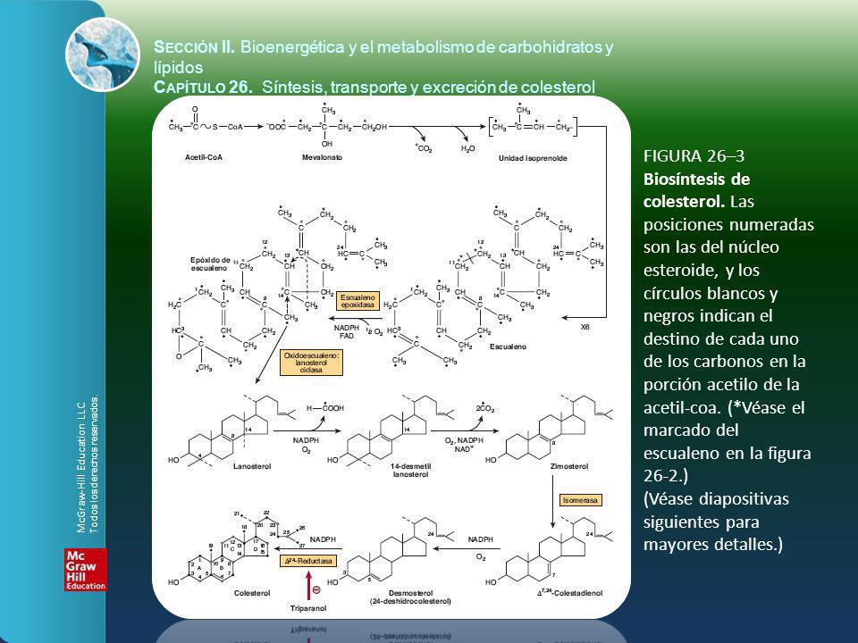FIGURA 26–3 Biosíntesis de colesterol. Las posiciones numeradas son las del núcleo esteroide, y los círculos blancos y negros indican el destino de ca