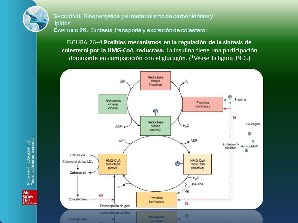 FIGURA 26–4 Posibles mecanismos en la regulación de la síntesis de colesterol por la HMG-CoA reductasa. La insulina tiene una participación dominante