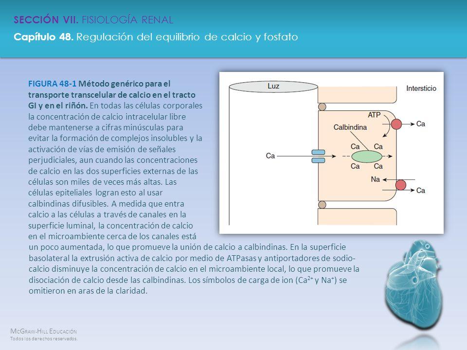 M C G RAW- H ILL E DUCACIÓN Todos los derechos reservados. Capítulo 48. Regulación del equilibrio de calcio y fosfato SECCIÓN VII. FISIOLOGÍA RENAL FI