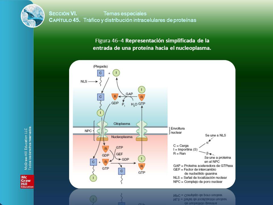 FIgura 46–5 Representación esquemática de la entrada de una proteína hacia la matriz peroxisómica.