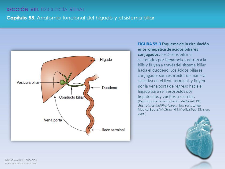 M C G RAW- H ILL E DUCACIÓN Todos los derechos reservados. Capítulo 55. Anatomía funcional del hígado y el sistema biliar SECCIÓN VIII. FISIOLOGÍA REN