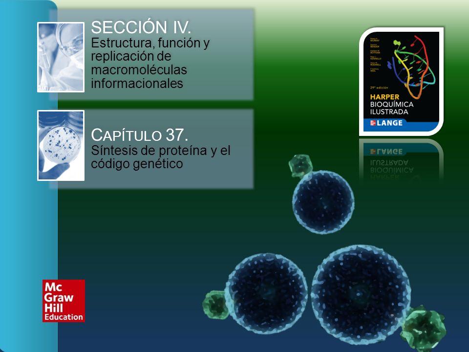 SECCIÓN IV. Estructura, función y replicación de macromoléculas informacionales C APÍTULO 37. Síntesis de proteína y el código genético