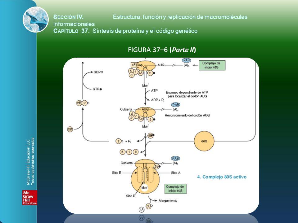 FIGURA 37–6 (Parte II) S ECCIÓN IV.Estructura, función y replicación de macromoléculas informacionales C APÍTULO 37. Síntesis de proteína y el código