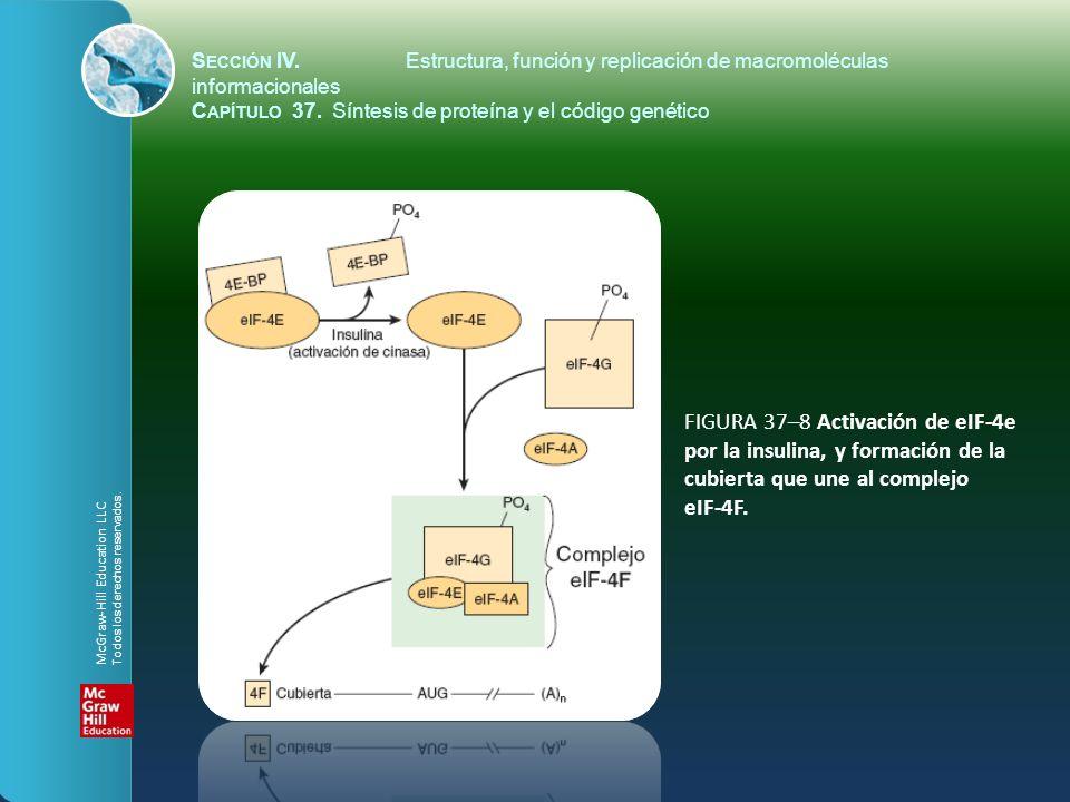 FIGURA 37–8 Activación de eIF-4e por la insulina, y formación de la cubierta que une al complejo eIF-4F. S ECCIÓN IV.Estructura, función y replicación
