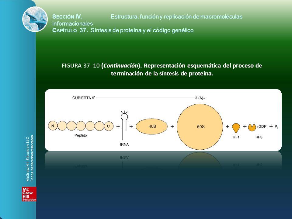 FIGURA 37–10 (Continuación). Representación esquemática del proceso de terminación de la síntesis de proteína. S ECCIÓN IV.Estructura, función y repli