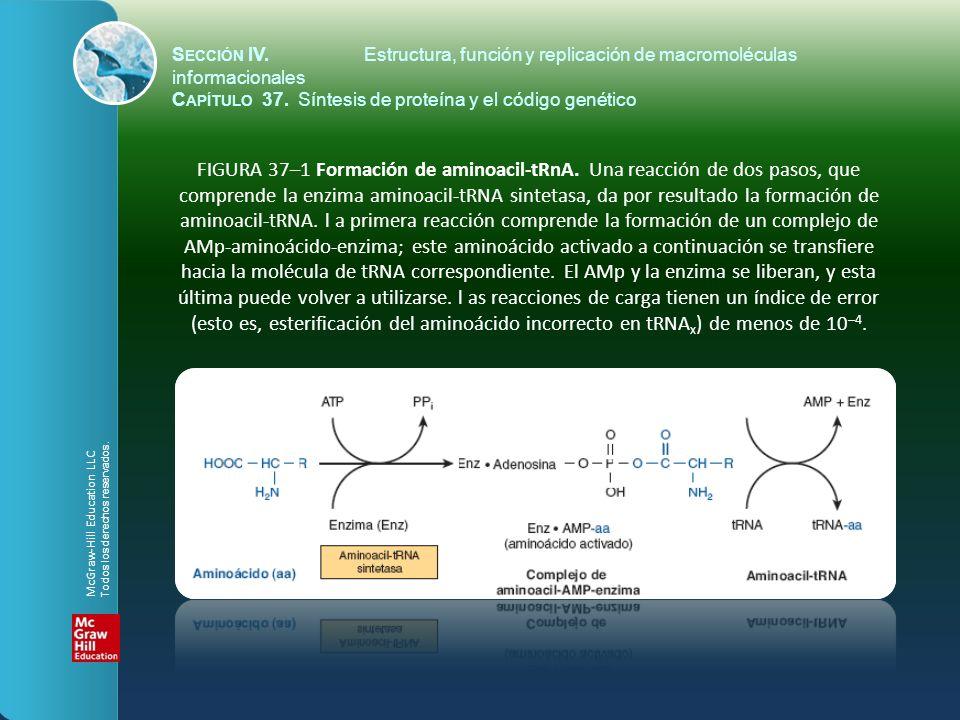 S ECCIÓN IV.Estructura, función y replicación de macromoléculas informacionales C APÍTULO 37. Síntesis de proteína y el código genético FIGURA 37–1 Fo