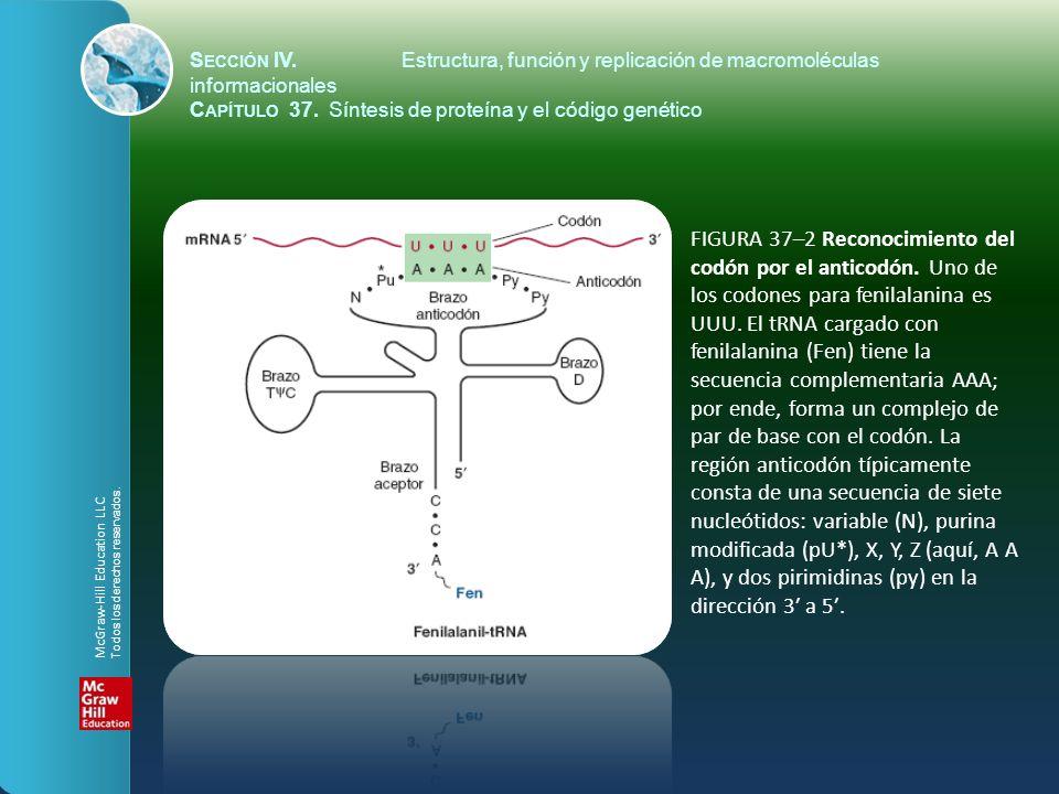 FIGURA 37–2 Reconocimiento del codón por el anticodón. Uno de los codones para fenilalanina es UUU. El tRNA cargado con fenilalanina (Fen) tiene la se