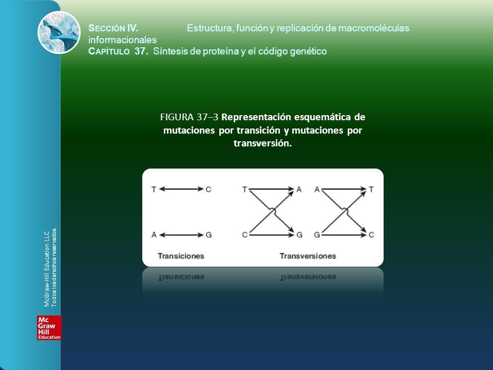 FIGURA 37–3 Representación esquemática de mutaciones por transición y mutaciones por transversión. S ECCIÓN IV.Estructura, función y replicación de ma
