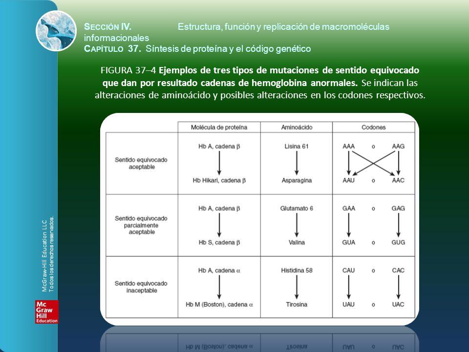 FIGURA 37–4 Ejemplos de tres tipos de mutaciones de sentido equivocado que dan por resultado cadenas de hemoglobina anormales. Se indican las alteraci