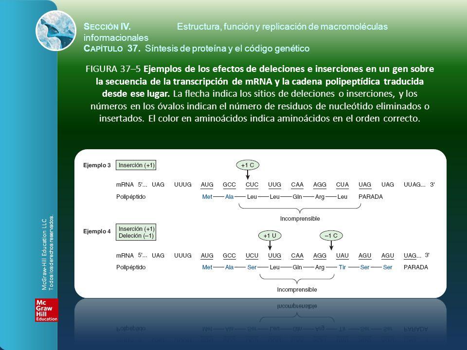 FIGURA 37–5 Ejemplos de los efectos de deleciones e inserciones en un gen sobre la secuencia de la transcripción de mRNA y la cadena polipeptídica tra
