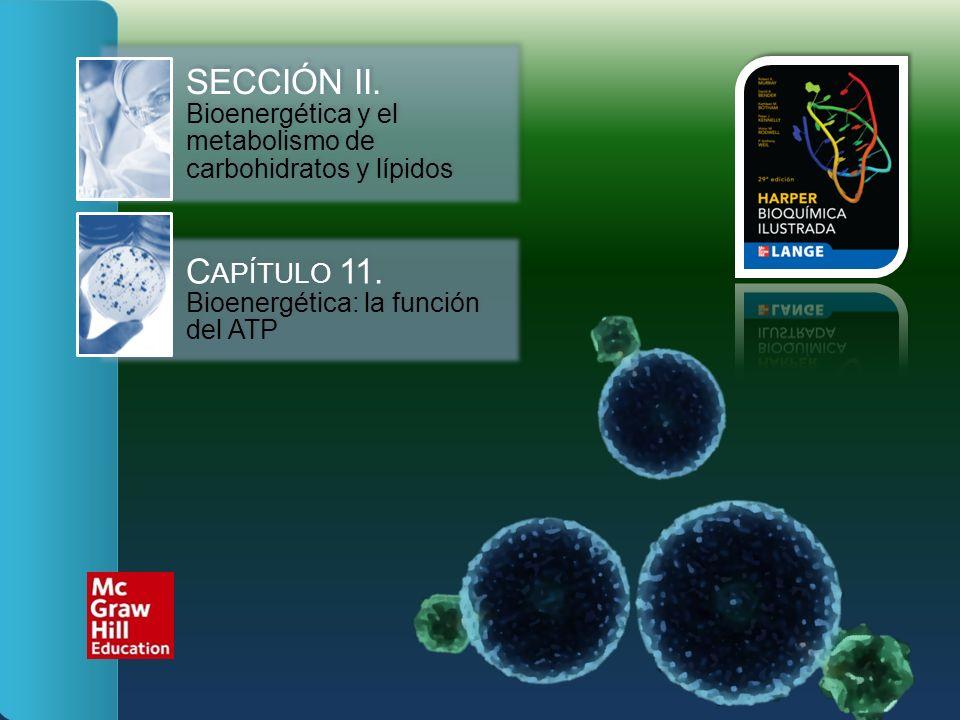 SECCIÓN II. Bioenergética y el metabolismo de carbohidratos y lípidos C APÍTULO 11. Bioenergética: la función del ATP