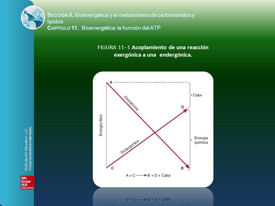 S ECCIÓN II. Bioenergética y el metabolismo de carbohidratos y lípidos C APÍTULO 11. Bioenergética: la función del ATP FIGURA 11–1 Acoplamiento de una