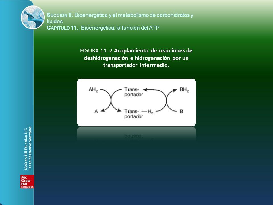FIGURA 11–2 Acoplamiento de reacciones de deshidrogenación e hidrogenación por un transportador intermedio. S ECCIÓN II. Bioenergética y el metabolism
