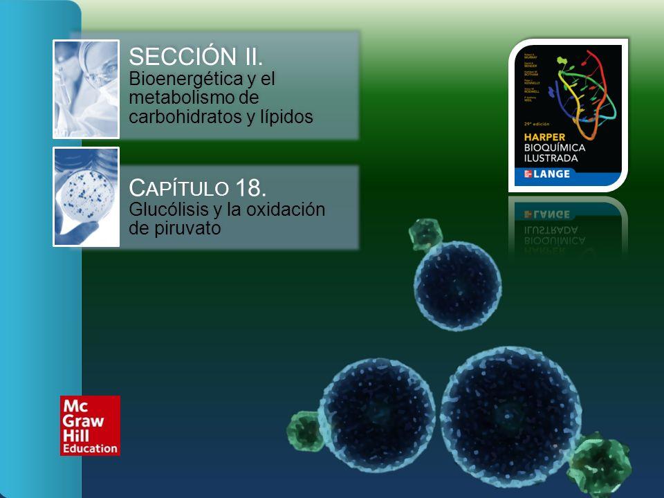 SECCIÓN II. Bioenergética y el metabolismo de carbohidratos y lípidos C APÍTULO 18. Glucólisis y la oxidación de piruvato