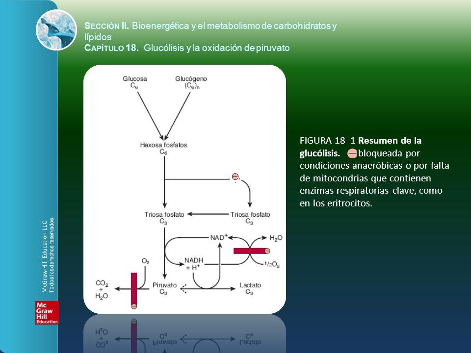 FIGURA 18–2 La vía de la glucólisis.