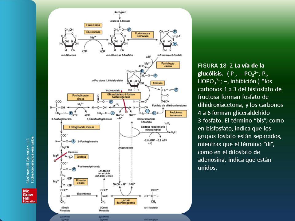FIGURA 18–2 La vía de la glucólisis. ( P, PO 3 2 ; P i, HOPO 3 2 ;, inhibición.) *los carbonos 1 a 3 del bisfosfato de fructosa forman fosfato de dihi