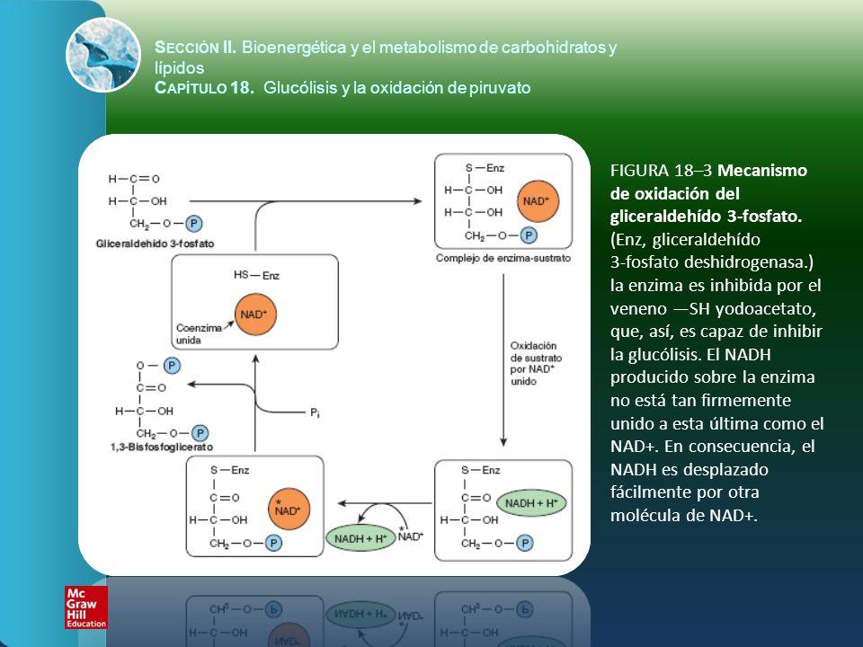 FIGURA 18–3 Mecanismo de oxidación del gliceraldehído 3-fosfato. (Enz, gliceraldehído 3-fosfato deshidrogenasa.) la enzima es inhibida por el veneno S