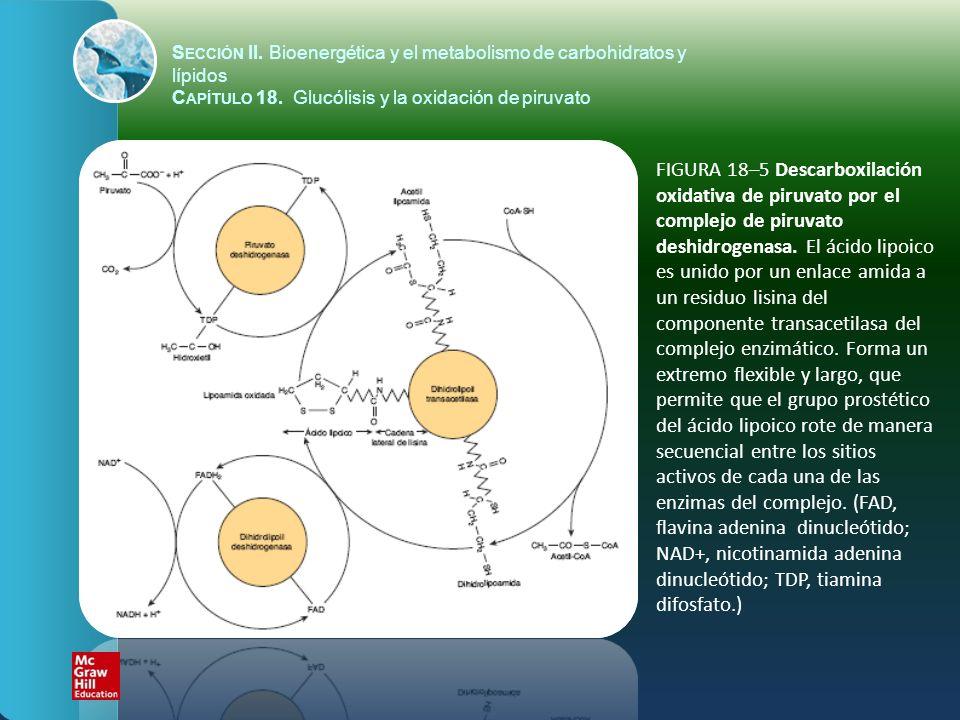 FIGURA 18–5 Descarboxilación oxidativa de piruvato por el complejo de piruvato deshidrogenasa. El ácido lipoico es unido por un enlace amida a un resi