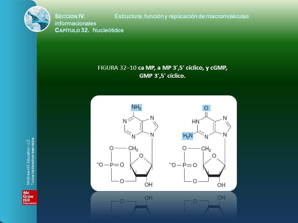 FIGURA 32–10 ca MP, a MP 3,5 cíclico, y cGMP, GMP 3,5 cíclico. S ECCIÓN IV.Estructura, función y replicación de macromoléculas informacionales C APÍTU