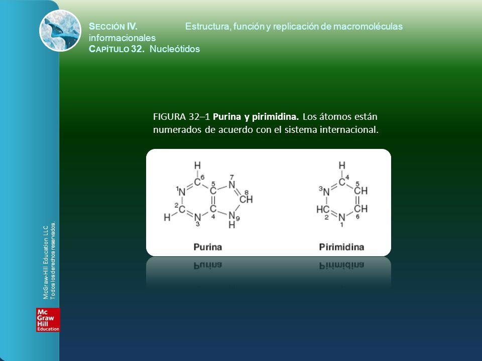 S ECCIÓN IV.Estructura, función y replicación de macromoléculas informacionales C APÍTULO 32. Nucleótidos FIGURA 32–1 Purina y pirimidina. Los átomos