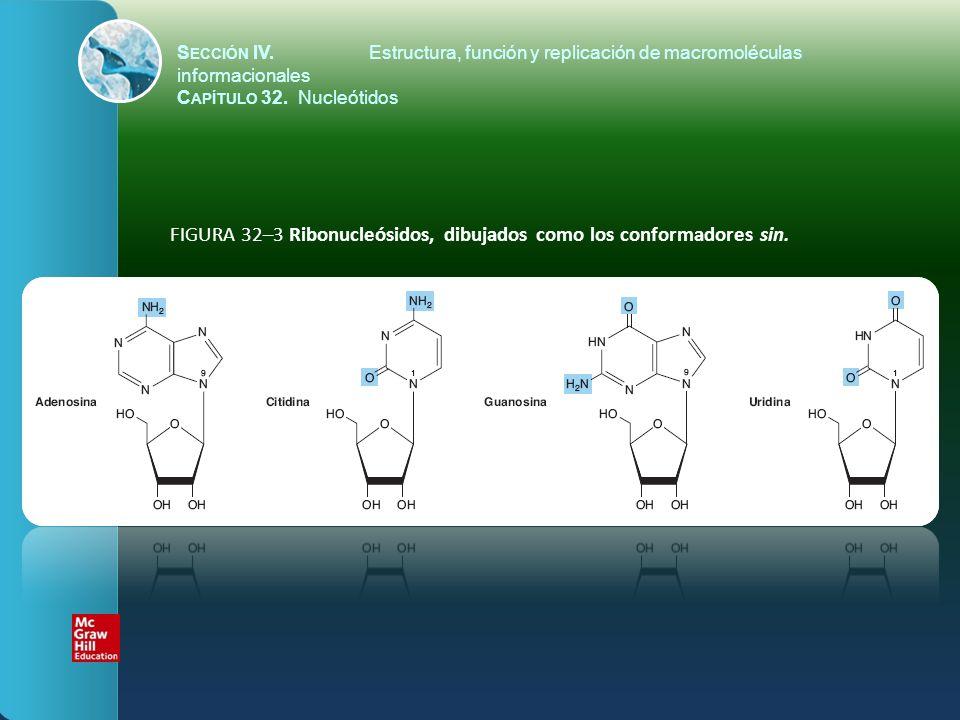 FIGURA 32–3 Ribonucleósidos, dibujados como los conformadores sin. S ECCIÓN IV.Estructura, función y replicación de macromoléculas informacionales C A