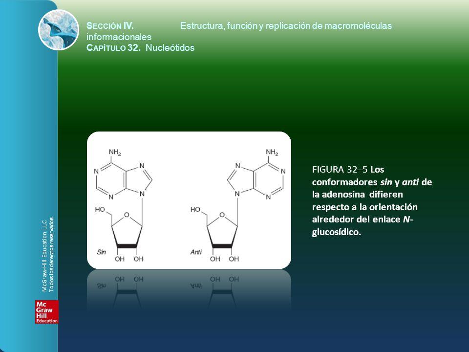 FIGURA 32–5 Los conformadores sin y anti de la adenosina difieren respecto a la orientación alrededor del enlace N- glucosídico. S ECCIÓN IV.Estructur