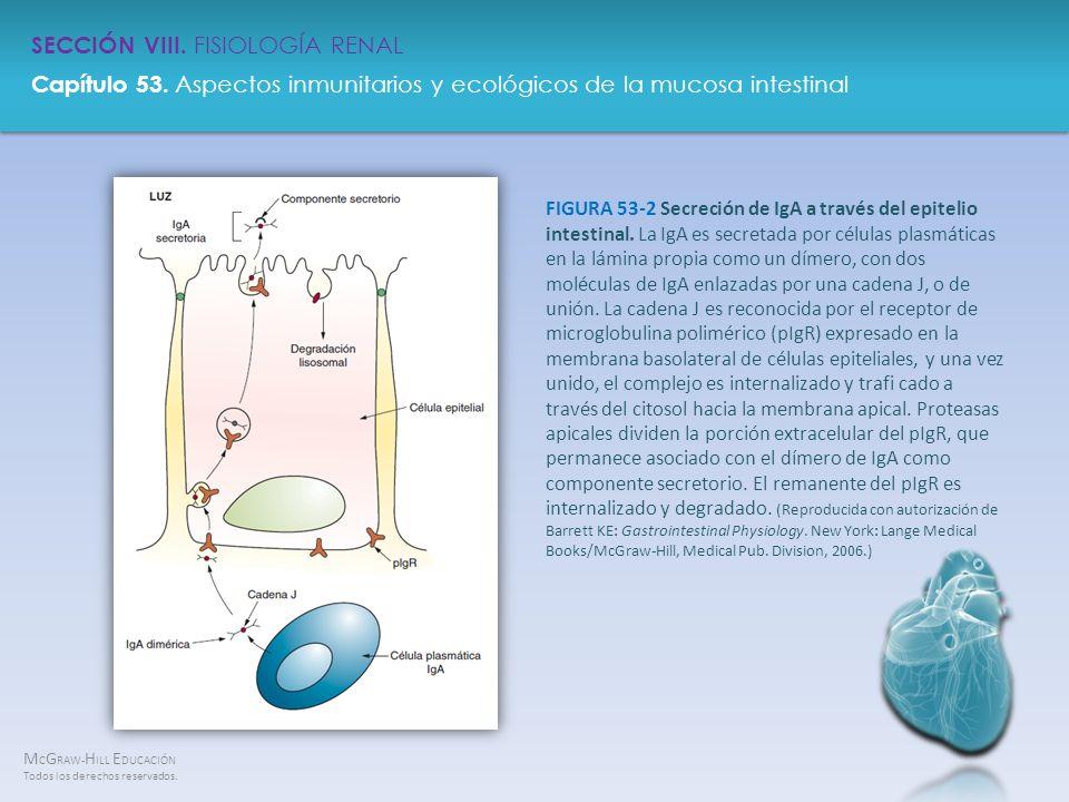 M C G RAW- H ILL E DUCACIÓN Todos los derechos reservados. Capítulo 53. Aspectos inmunitarios y ecológicos de la mucosa intestinal SECCIÓN VIII. FISIO