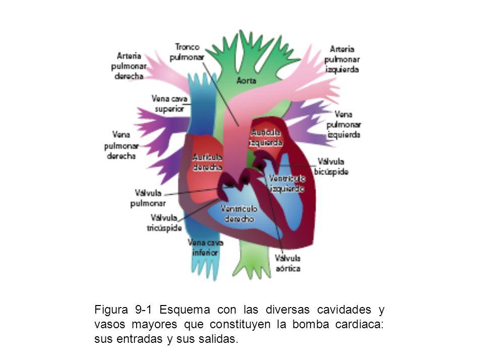Figura 9-1 Esquema con las diversas cavidades y vasos mayores que constituyen la bomba cardiaca: sus entradas y sus salidas.